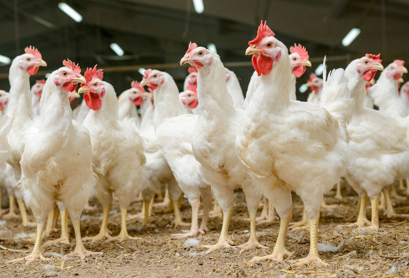 AG-Gag Laws:  Protection for the Animal Slaughter/Processing Industry